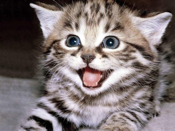 Mơ thấy mèo đánh con gì, điềm báo tốt hay xấu?