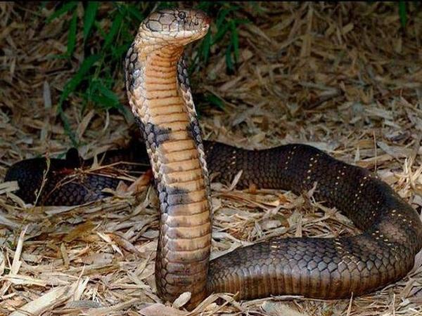 Mơ thấy rắn là điềm gì, đánh con gì dễ trúng