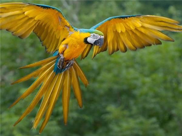 Giải mã điềm báo chim bay vào nhà và cách hóa giải