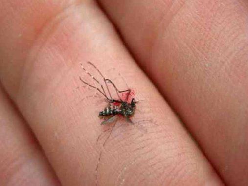 Mơ thấy con muỗi có phải điềm xấu, đánh số nào thì may mắn?