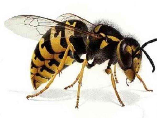 Mơ thấy ong – Khám phá điềm báo và số đề của giấc mơ thấy ong