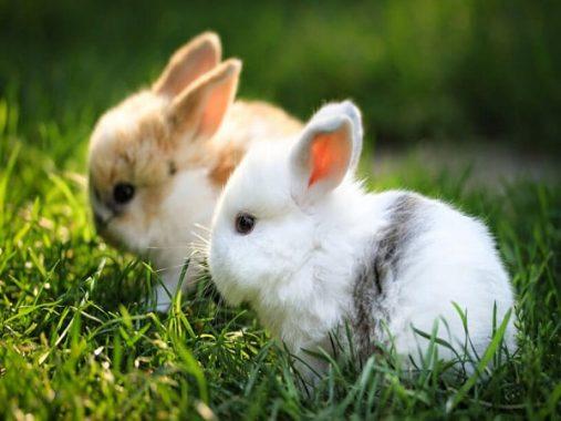 Nằm mơ thấy thỏ đánh con gì? Giải mã ý nghĩa giấc mơ