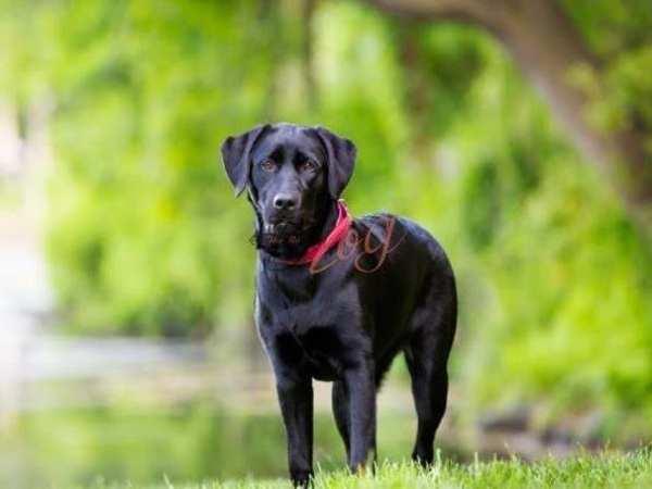 Nằm mơ thấy chó đen có ý nghĩa điềm báo gì, đánh con gì ăn chắc